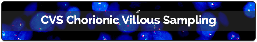 01---CVS-Chorionic-Villous-Sampling